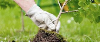 воспитание как возделывание сада
